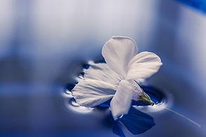 flowers-1167669_1920.jpg