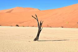 Wüste - Namibia Travel