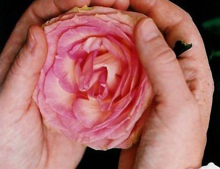 Unsere Schönheit und Liebe im Herzen bewußt wahrnehmen