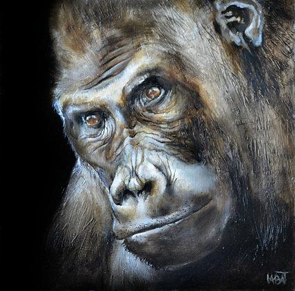 Gorille n°1