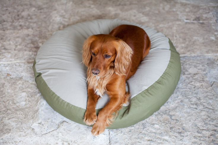 Barka Parka Bean Bed Beau Cocker Spaniel