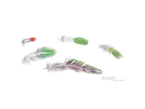 Ruby Hummingbird