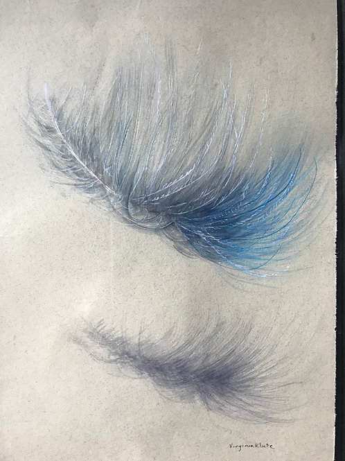 Floating Bluebird Feather
