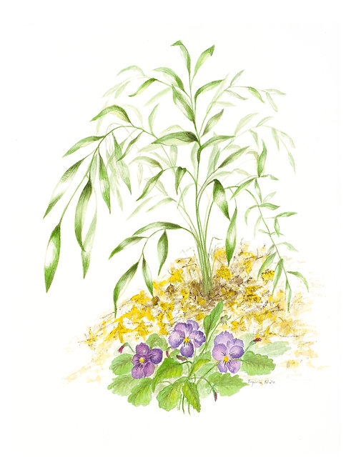 Poet's Laurel with Pansy