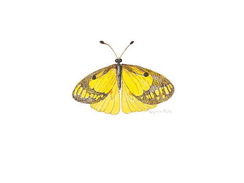 Yellow Butterfly 2