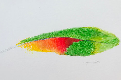 Parrot Feather