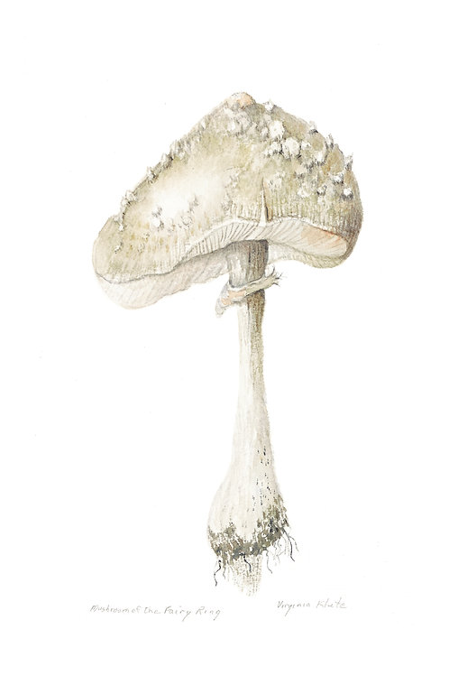 Fairy Ring Mushroom