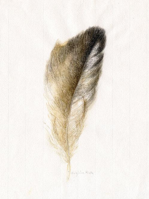 Condor Feather