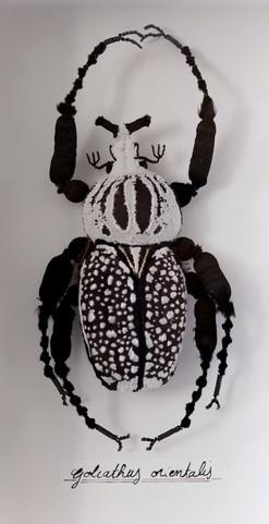 goliathus orientalis