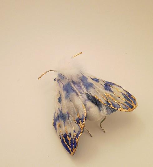 Papillon de nuit série bleue