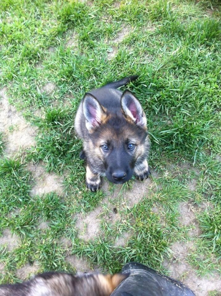 Kiva's Pup