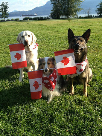 obedience class on canaday day in real life situation with crowd around them