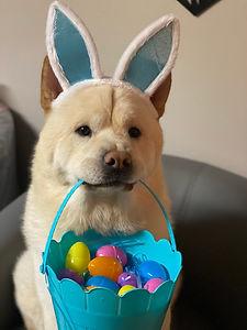 EasterChowChow