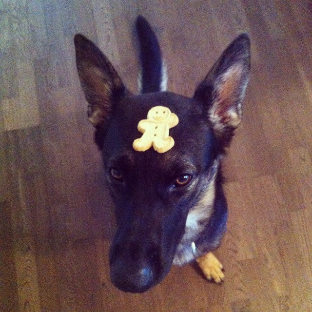 Obedience Cookie Trick