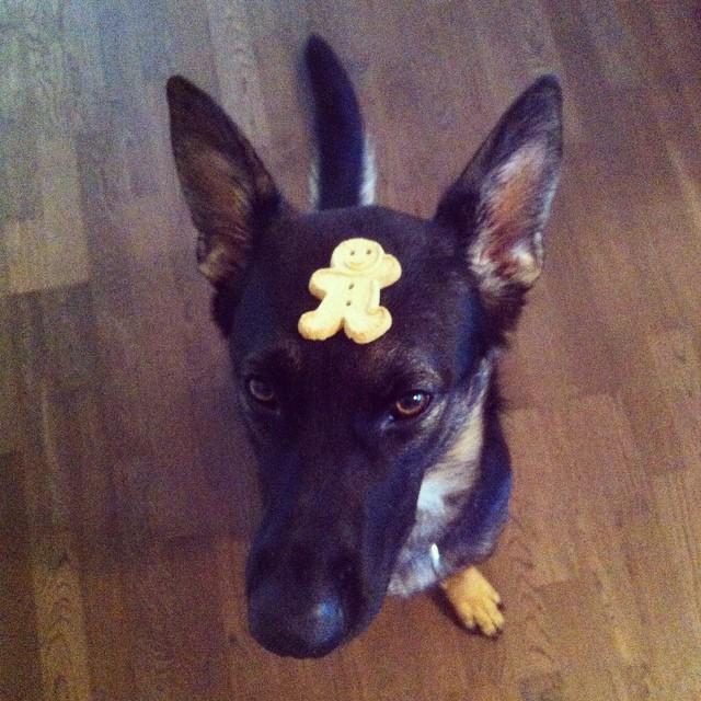 Obedience Cookie Trick