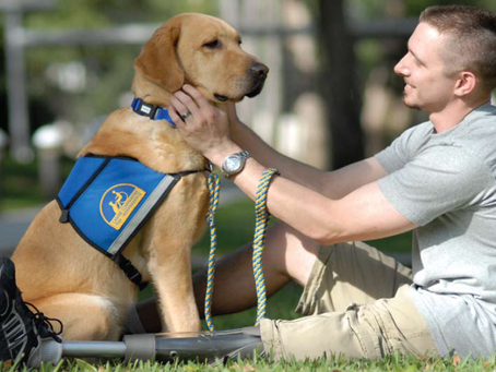 Dogs for the disabled – a mutually beneficial human-animal interaction?