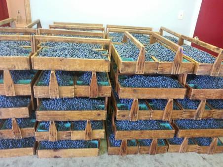 Wholesale 4.jpg