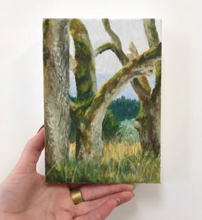 Elder Oak