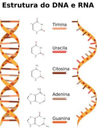 Estrutura do DNA e RNA