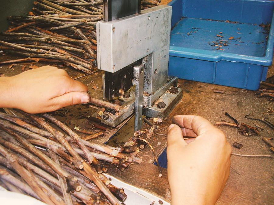 6.Enxertia - Vitacea Brasil.jpg