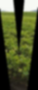 vitacea-brasil-v-matriz-2.png