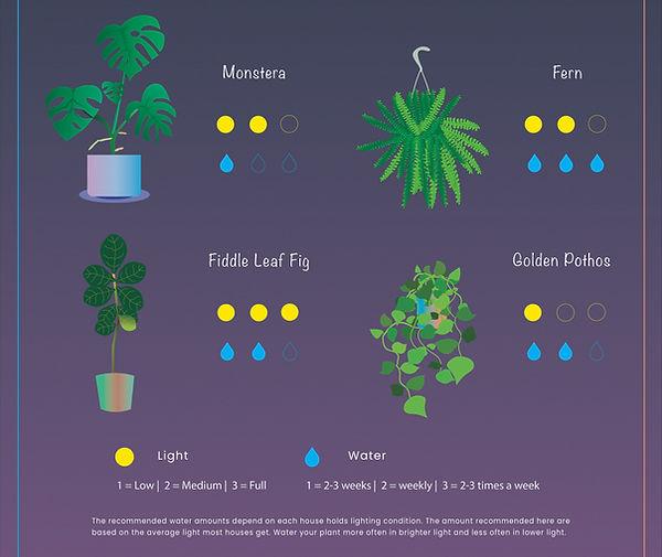 2 Plant.jpg