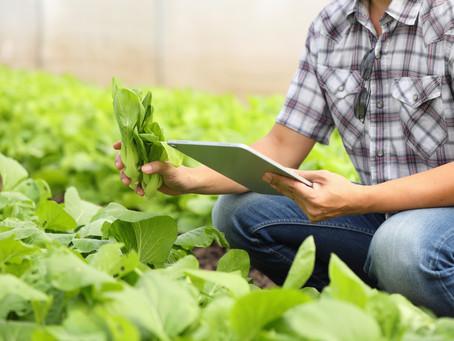 Tecnologias para o monitoramento e análise de dados impulsionam o agronegócio