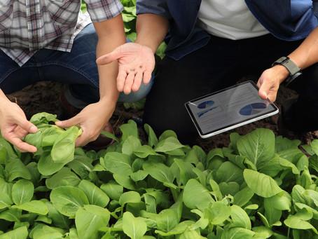 Internet das Coisas: exemplos de aplicações de IoT na agricultura