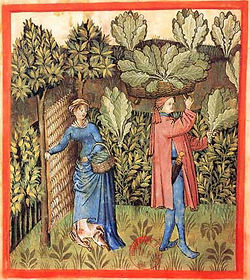 X-Tacuinum-sanitatis-tressage-Rouen.jpg