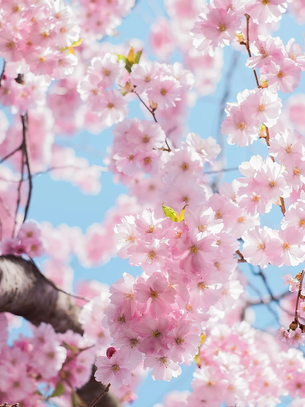3 Tips to Clear the Clutter | Spring Cleaning for Your Career Search