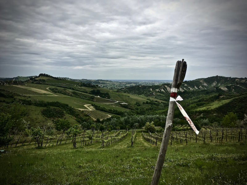 salatissimo - colline romagnole