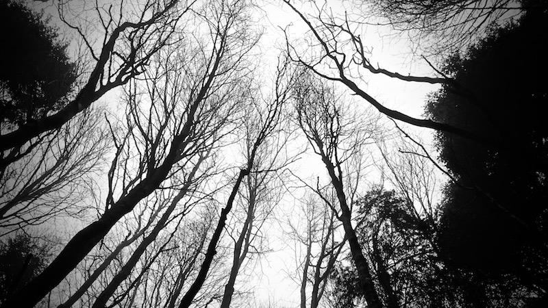 salatissimo - alberi