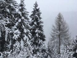 salatissimo - snow