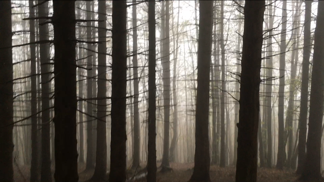 salatissimo - trees
