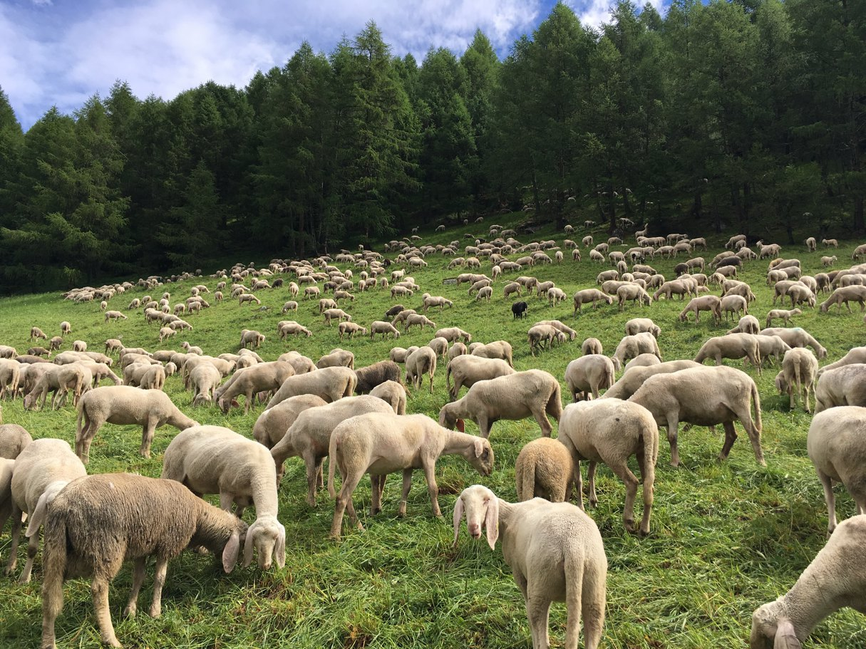 salatissimo - Val Canè
