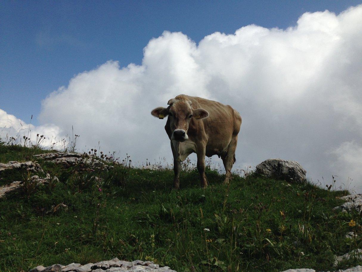 salatissimo - Monte Baldo