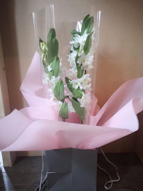Dendrobium Orchid in Bag