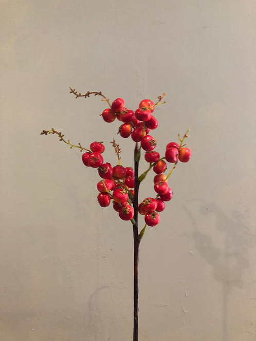 Light Red Rosehip Berry