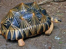Happy tortoise!