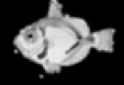 fish2.png