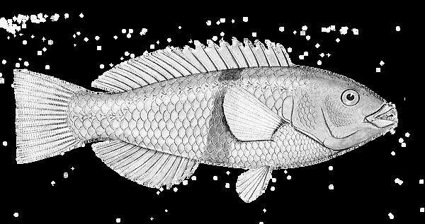 Sea-Life-5.png