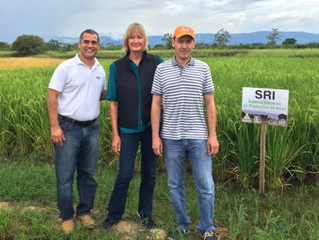 SRI is taking off in Colombia – Regional Workshop to share SRI experiences