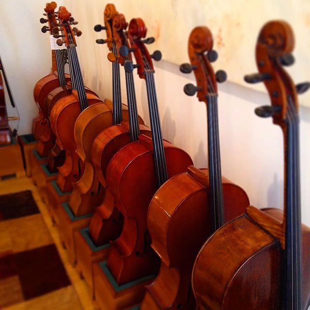 Cello Celli Cellos Sophie Klaus