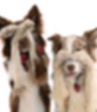 _DSC3393 hiding dogs.jpg