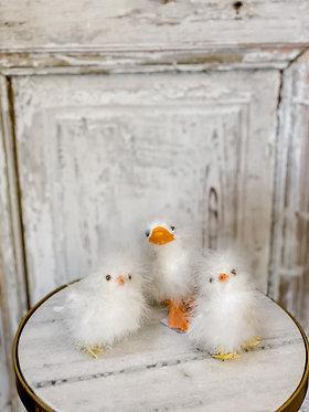 Ducks & Chicks