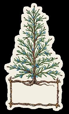 Table Accent - Cedar Tree
