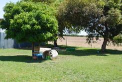 Dog play area