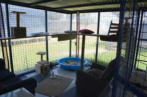 Cat play area