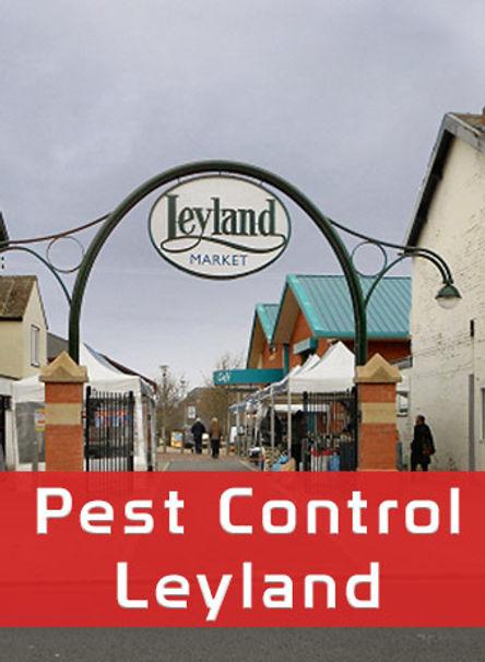 Pest Control leyland