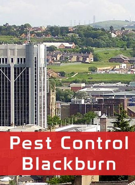 Pest Control in Blackburn